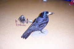ptaci-3