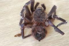 pavouk (2)